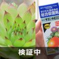 【検証中】多肉植物に付着する黒い点々を「ダコニール1000」で予防する
