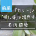 【前編】「カット」と「挿し芽」で増やす多肉植物