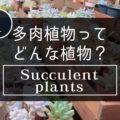 ユニークな葉が魅力の多肉植物って、どんな植物?